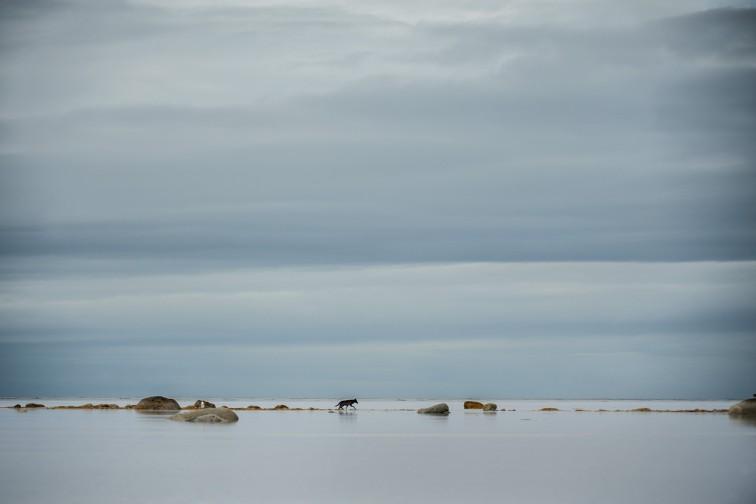SEA WOLVES _IMC2274