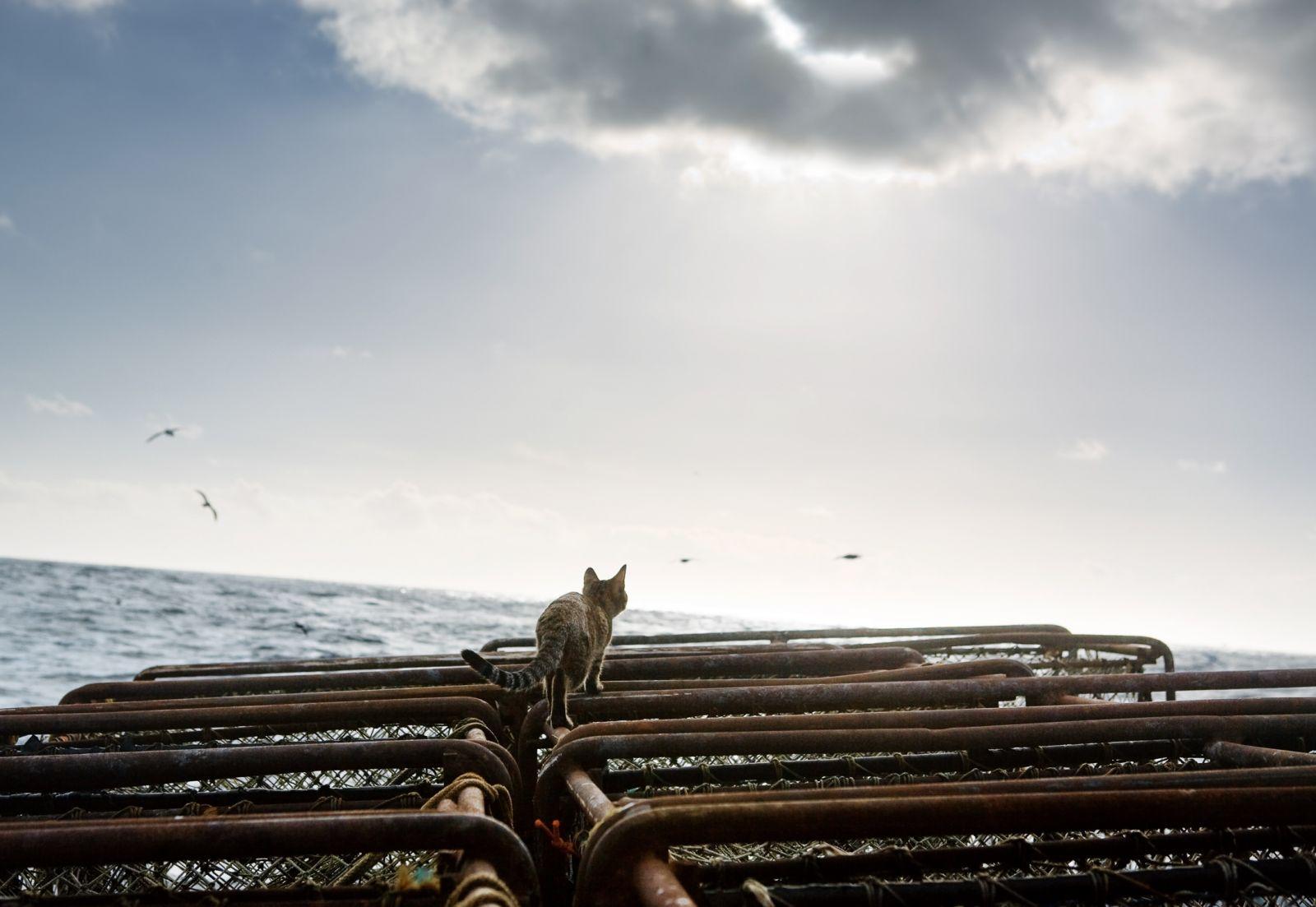 Corey Arnold, Sea Kitty's Journey, 2006