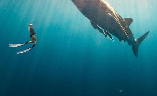 Whale-encounter-freediver